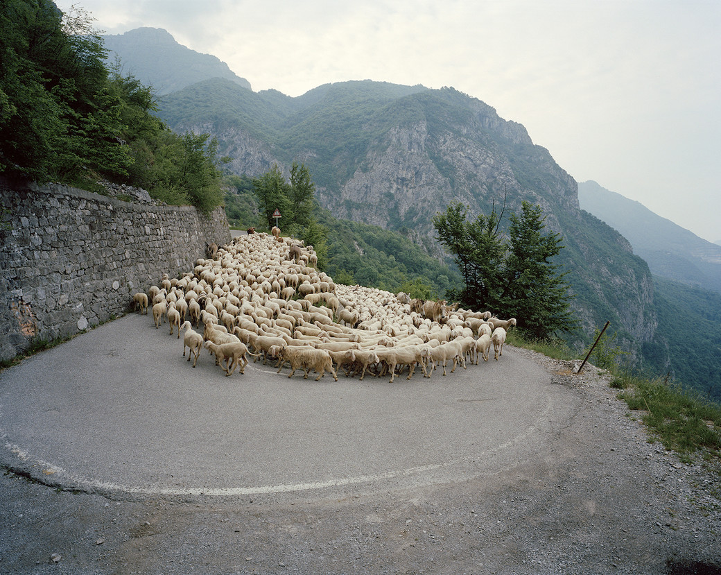 sheep migration Po Valley mountain road bend