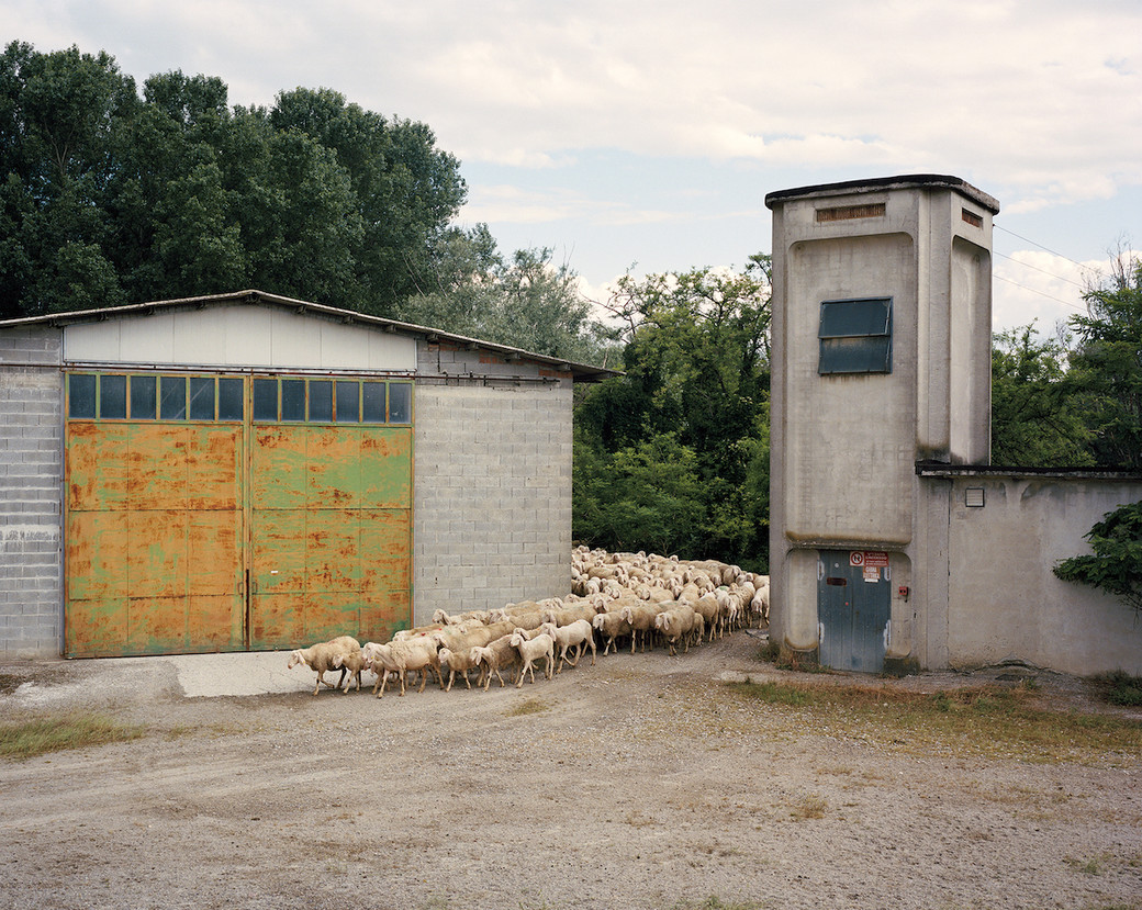 Po Valley sheep gate yard Italy shepherd
