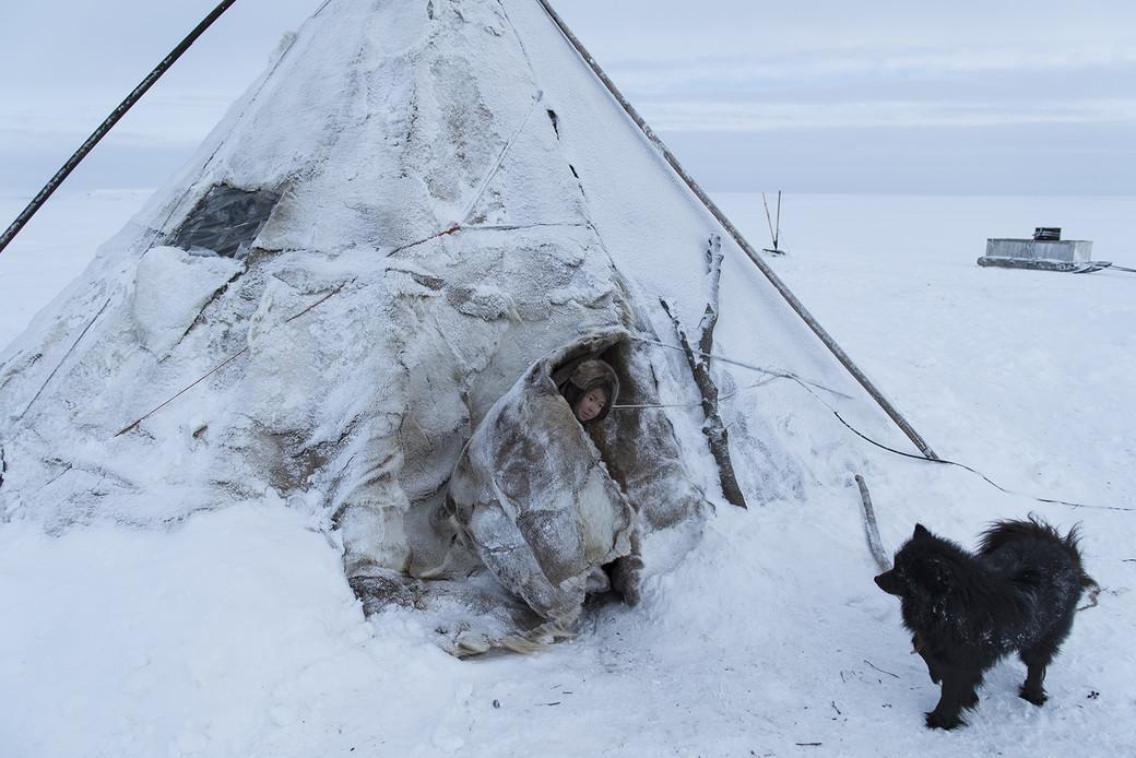 Siberia nomads snow Arctic