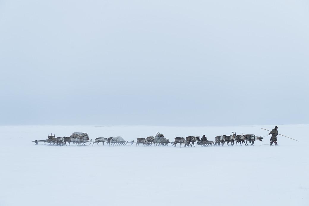 nomads Siberia sleds reindeer